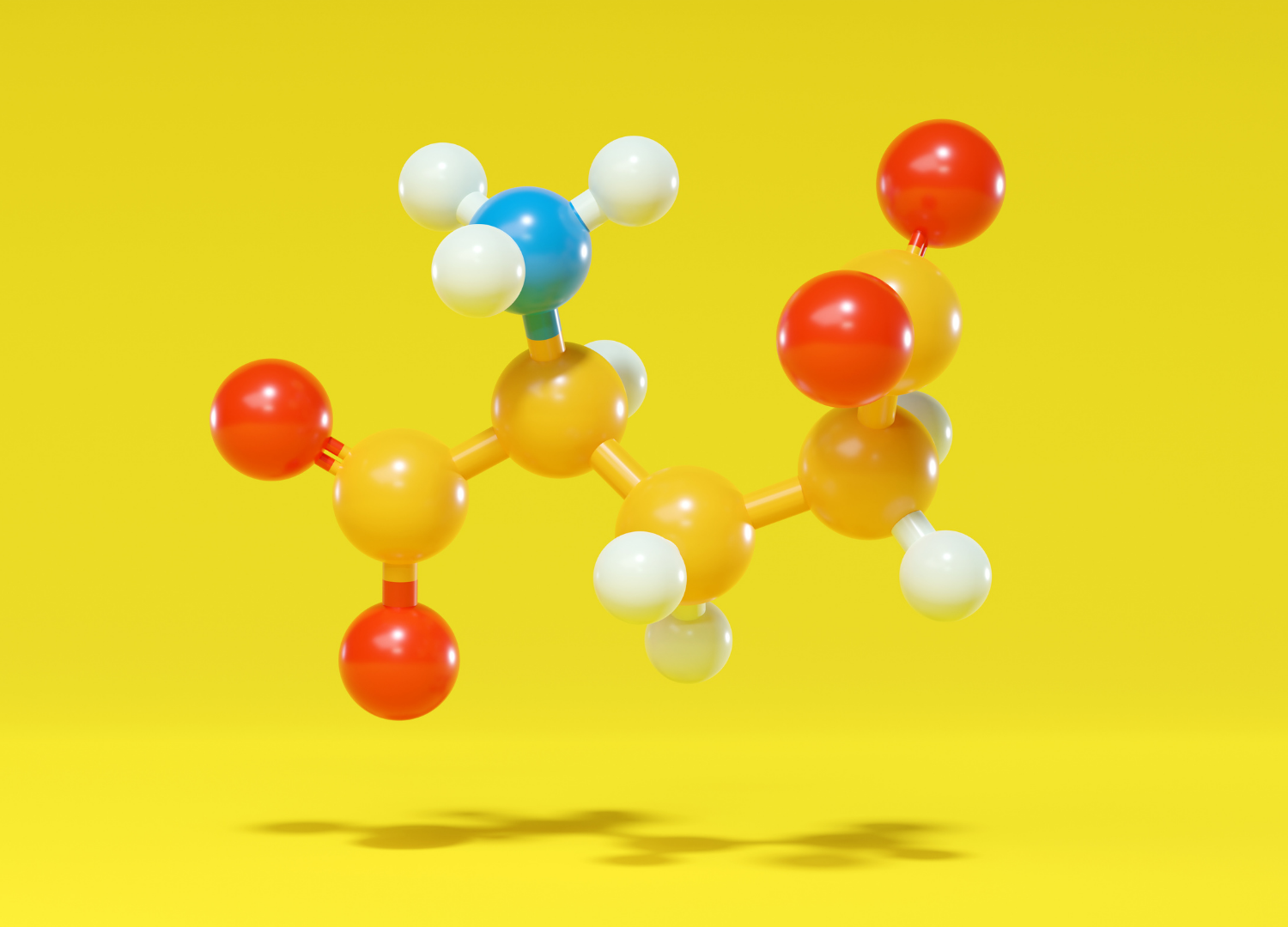 a model on different amino acids bonded togather